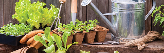 A set of gardening tools in a garden.
